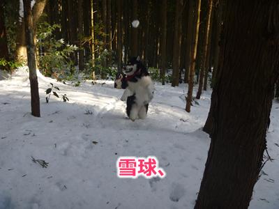 20130220国安24.jpg
