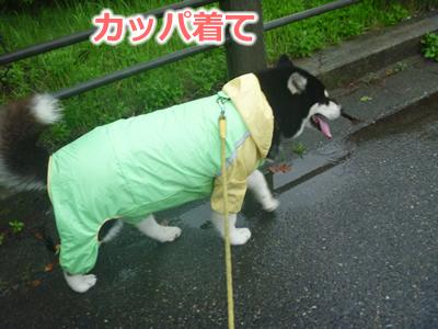 2013カッパ犬01.jpg