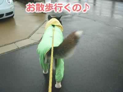 2013カッパ犬02.jpg