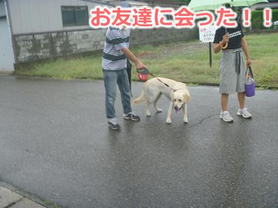 2013カッパ犬03.jpg