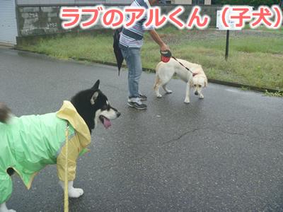 2013カッパ犬04.jpg
