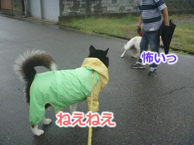 2013カッパ犬05.jpg