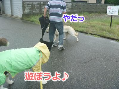 2013カッパ犬06.jpg