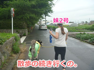 2013カッパ犬07.jpg