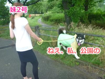 2013カッパ犬09.jpg