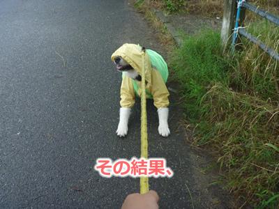 2013カッパ犬12.jpg