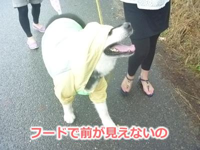 2013カッパ犬13.jpg