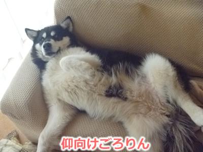 2013ソファーに横になる09.jpg