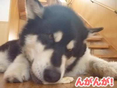 2013犬パン07.jpg
