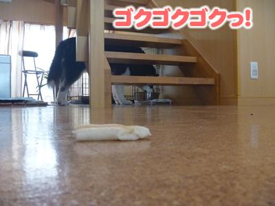 2013犬パン09.jpg