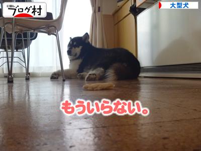 2013犬パン10.jpg