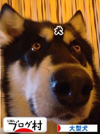 2014大型犬バナー.jpg