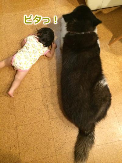 20150722ちゅ03.jpg