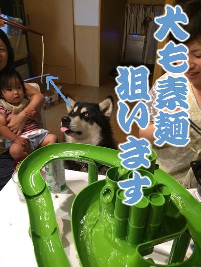 20150813素麺3.jpg