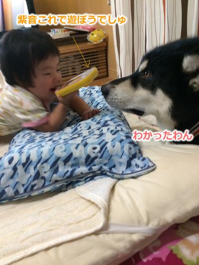 20150831お布団と大型犬.jpg