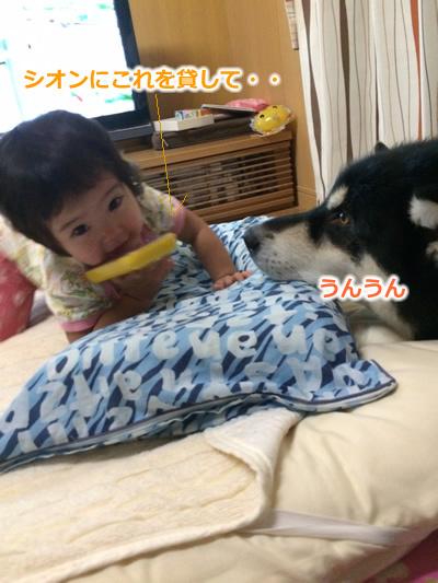 20150831お布団と大型犬02.jpg