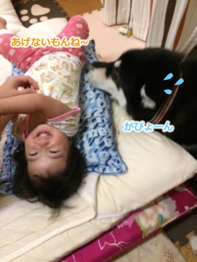 20150831お布団と大型犬03.jpg