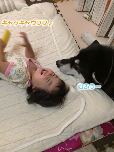 20150831お布団と大型犬04.jpg