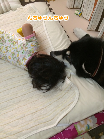 20150831お布団と大型犬05.jpg