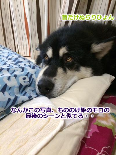 20150831お布団と大型犬08.jpg