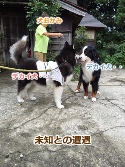 20150915季節宿國安07.jpg