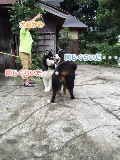 20150915季節宿國安08.jpg