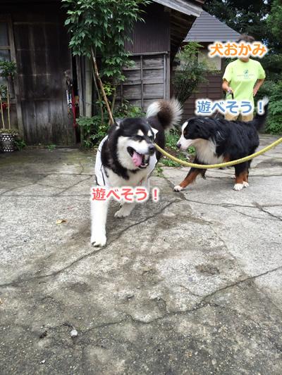 20150915季節宿國安09.jpg
