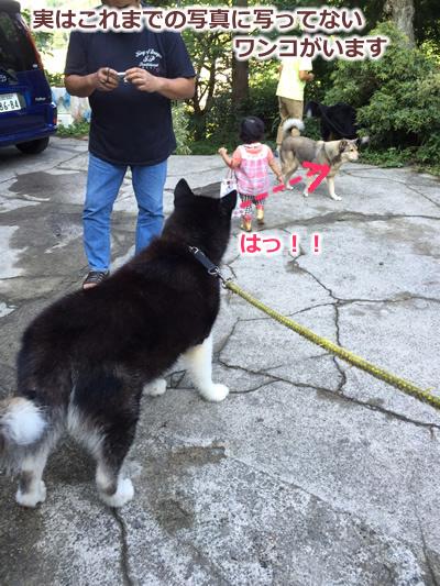 20150915季節宿國安27.jpg