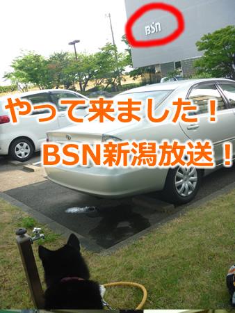 BSN01.jpg