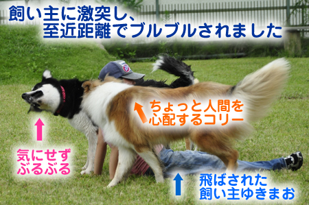 かぶたん3.jpg