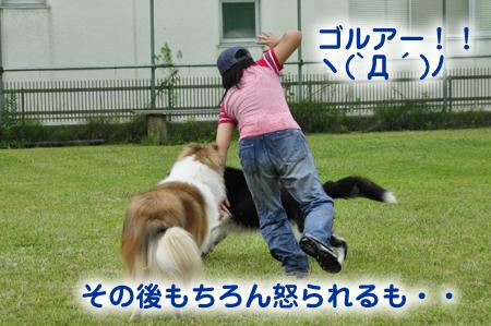 かぶたん4.jpg
