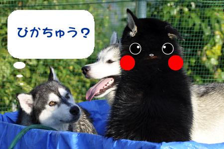 なんの生き物2.jpg