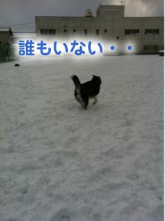 ひとりぼっちのドックラン雪原編01.jpg