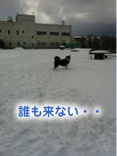 ひとりぼっちのドックラン雪原編02.jpg