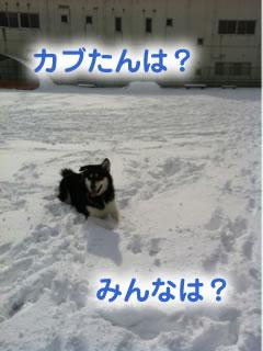 ひとりぼっちのドックラン雪原編03.jpg