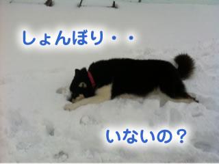 ひとりぼっちのドックラン雪原編04.jpg