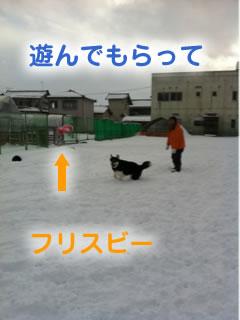 ひとりぼっちのドックラン雪原編06.jpg