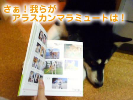 わんこ本03.jpg