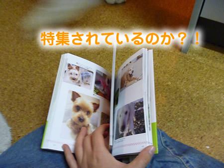 わんこ本05.jpg