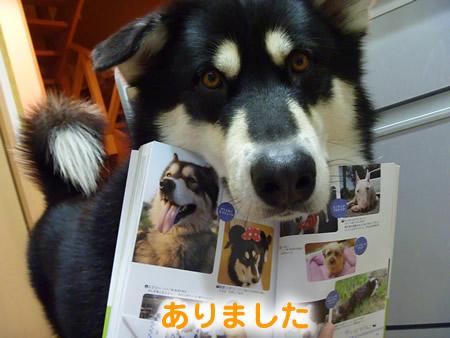 わんこ本09.jpg