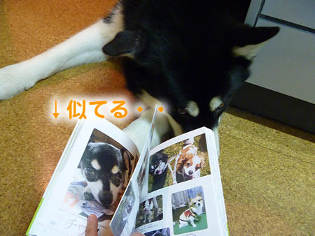 わんこ本13.jpg