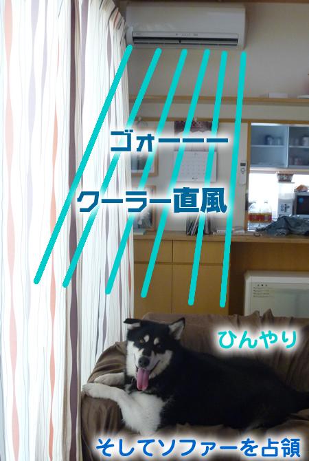 クーラー占領犬.jpg