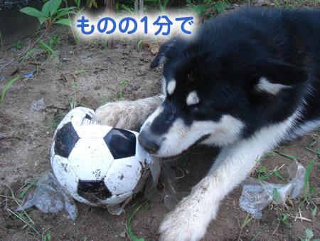 サッカー6.jpg