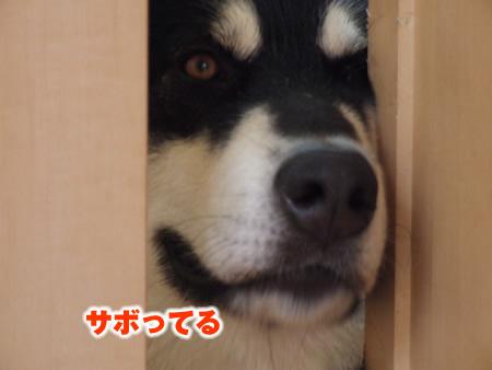 サボリ03.jpg