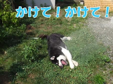 シャワー03.jpg