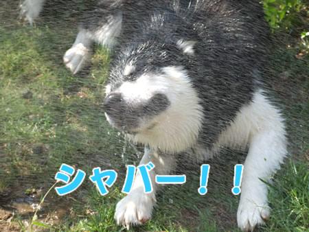シャワー04.jpg