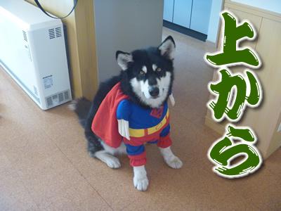 スーパーマンシオン05.jpg