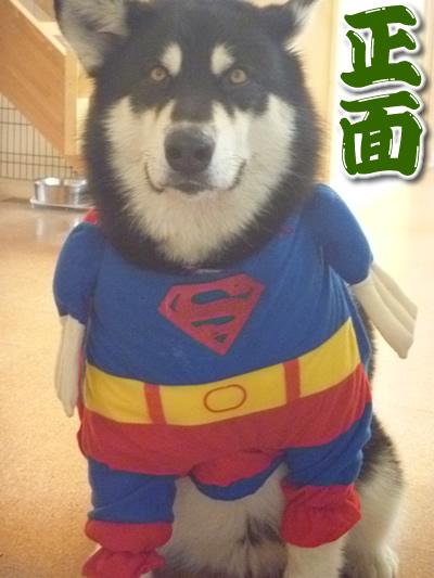 スーパーマンシオン07.jpg
