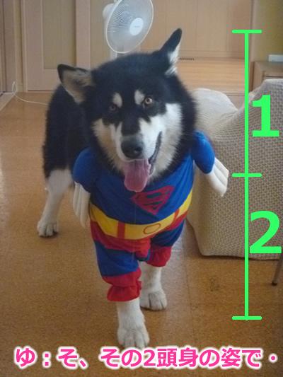 スーパーマンシオン09.jpg