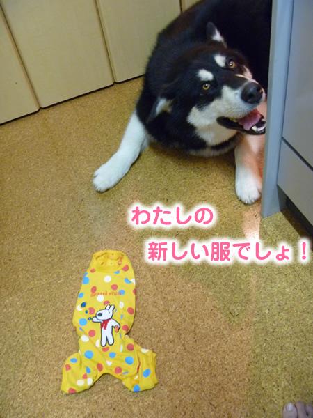 チワワ服03.jpg